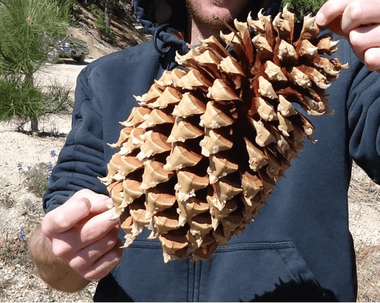 Nature Talks @ Big Bear Discovery Center