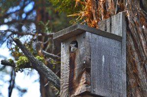 Nature Walk @ Big Bear Discovery Center